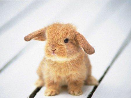 cuterabbit.jpg